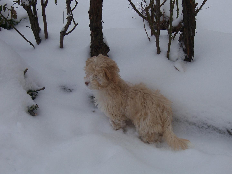 Ephy sous la neige