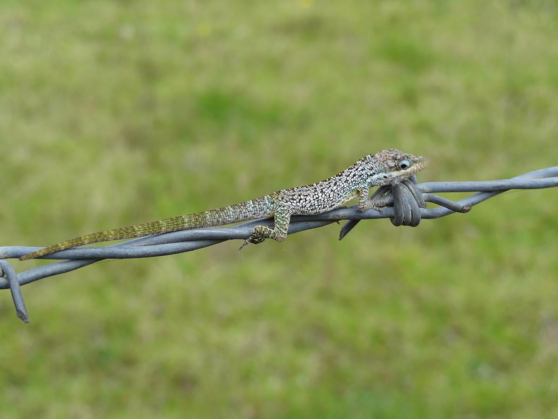 Equilibrio Reptil.