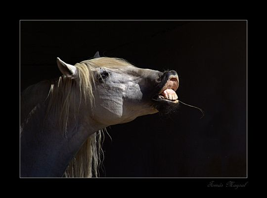 Equus Sonrisas