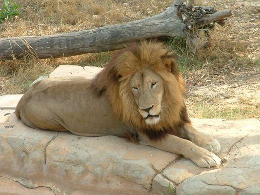Er bleibt einfach ein schönes Tier!!!