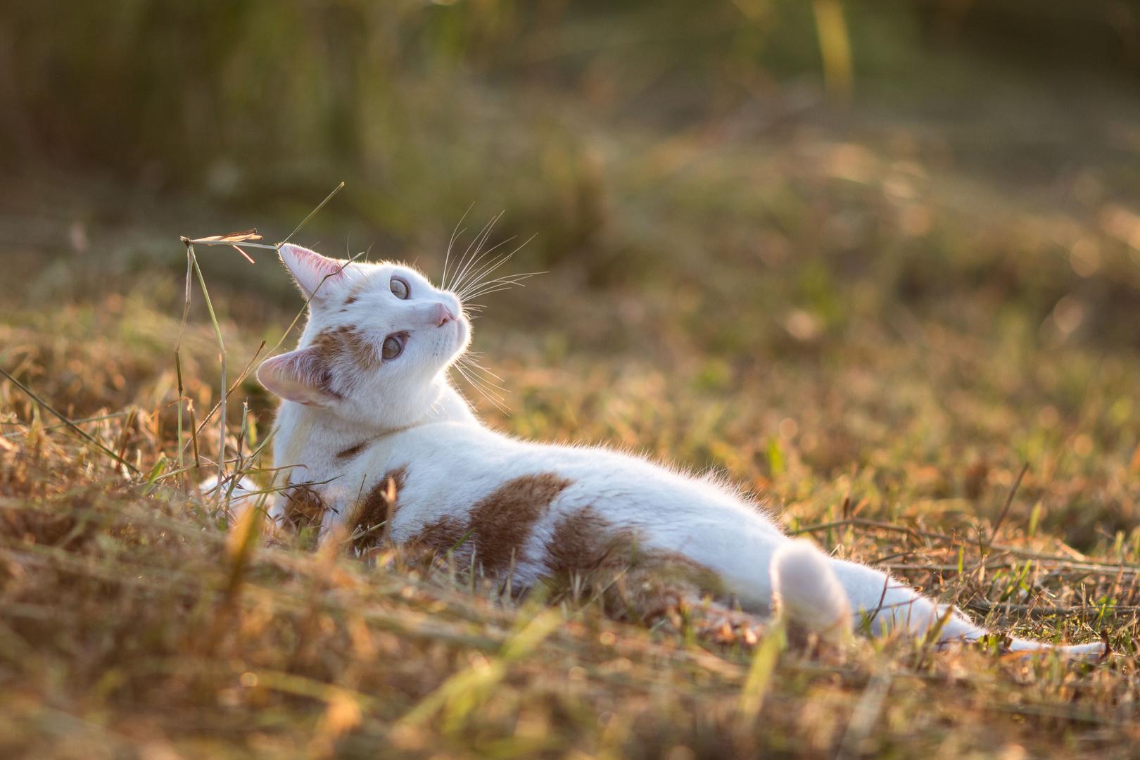 Er genießt die Abendsonne