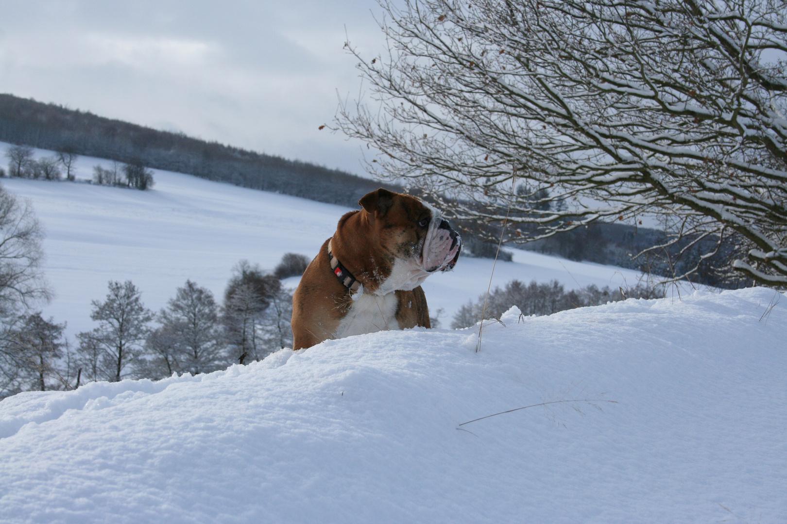 Er Hütet den Schnee!