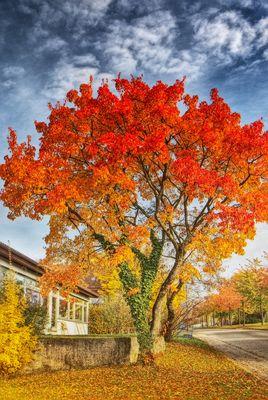 Er ist doch noch bunt der Herbst