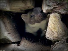 Er knötterte und rumorte im Stapelholz ...da wußte ich, daß er wach war....