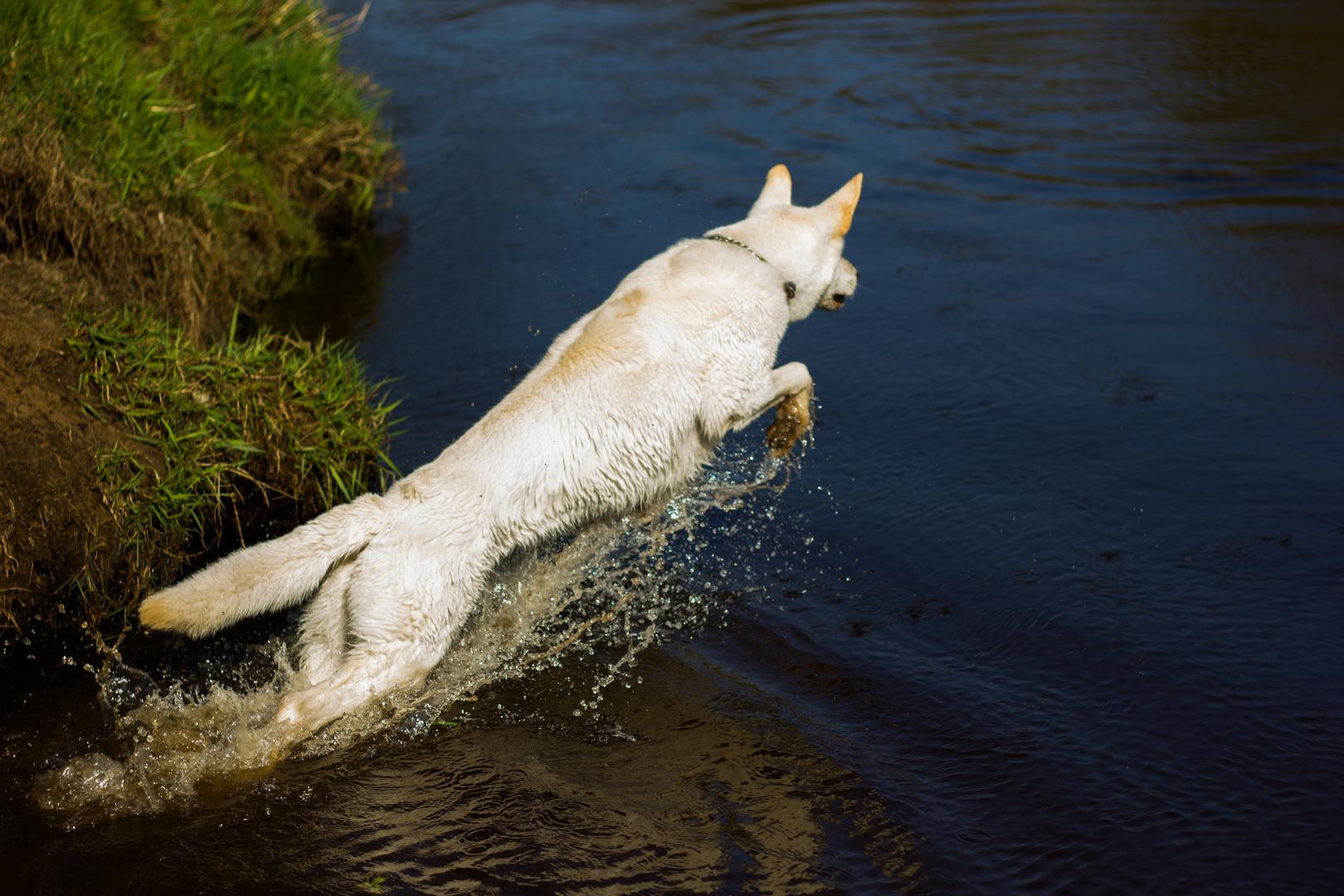 Er liebt es im Wasser zu sein.