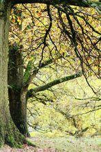 er nähert sich ganz  langsam der Herbst....