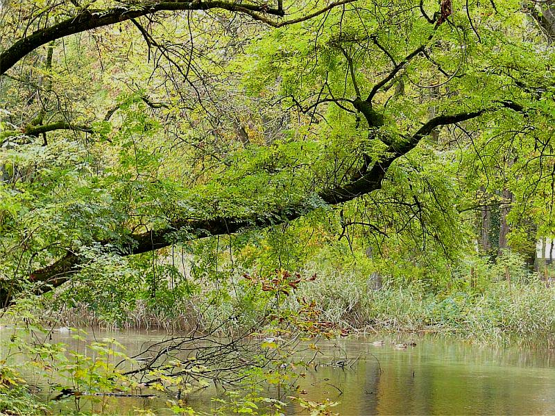 er schwingt sich über den Teich...