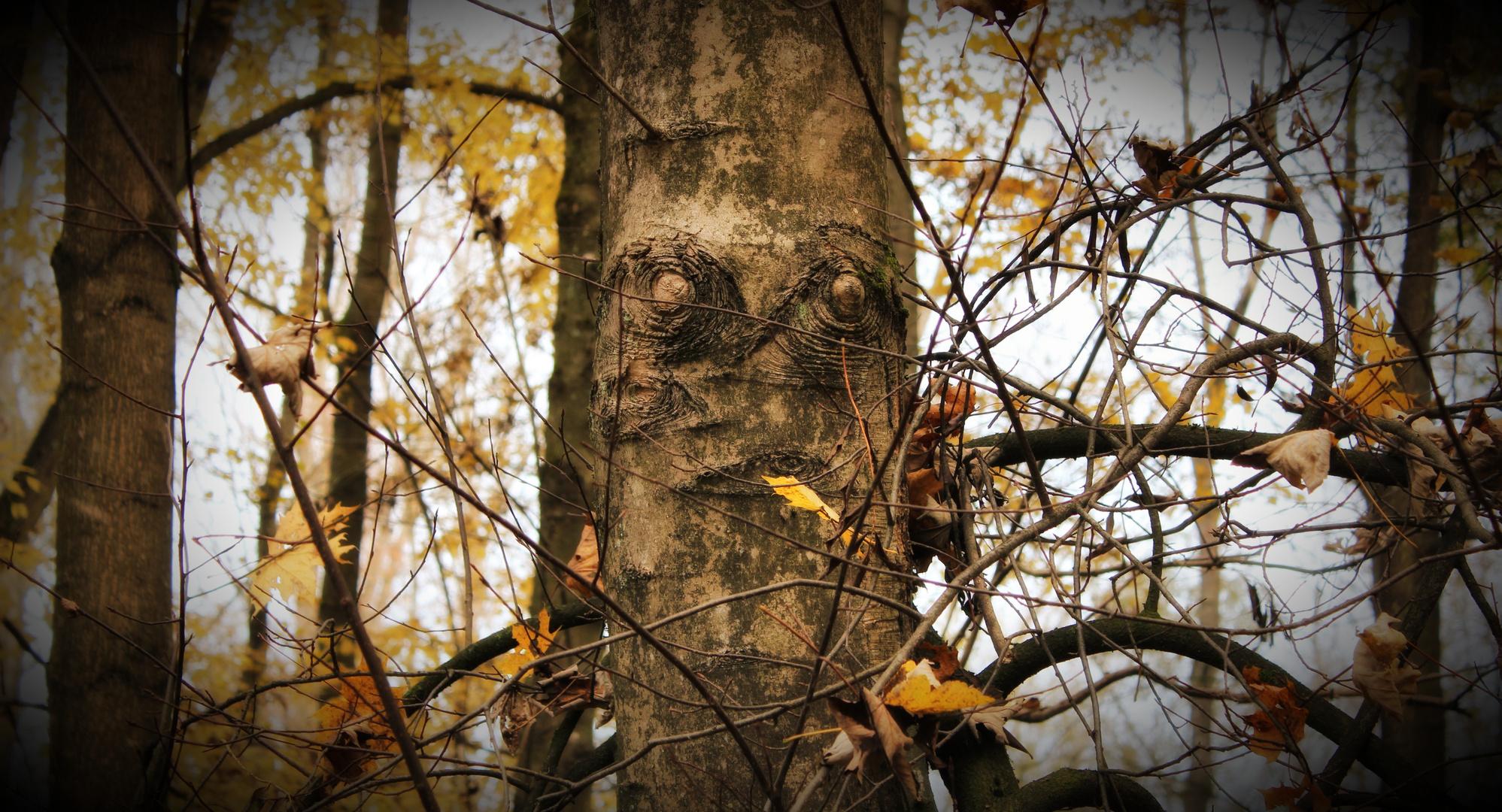 er sieht mich
