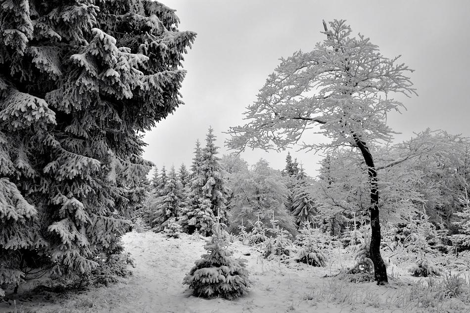 *Erbeskopf - Winter II*
