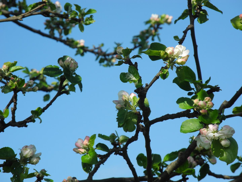 Erblühen
