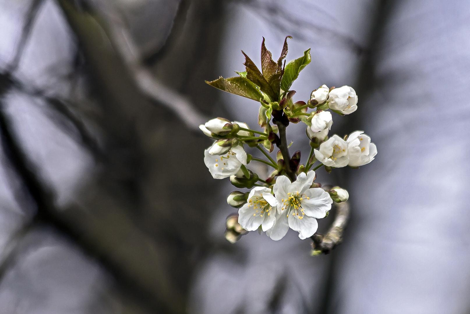 Erblühen im Walde...