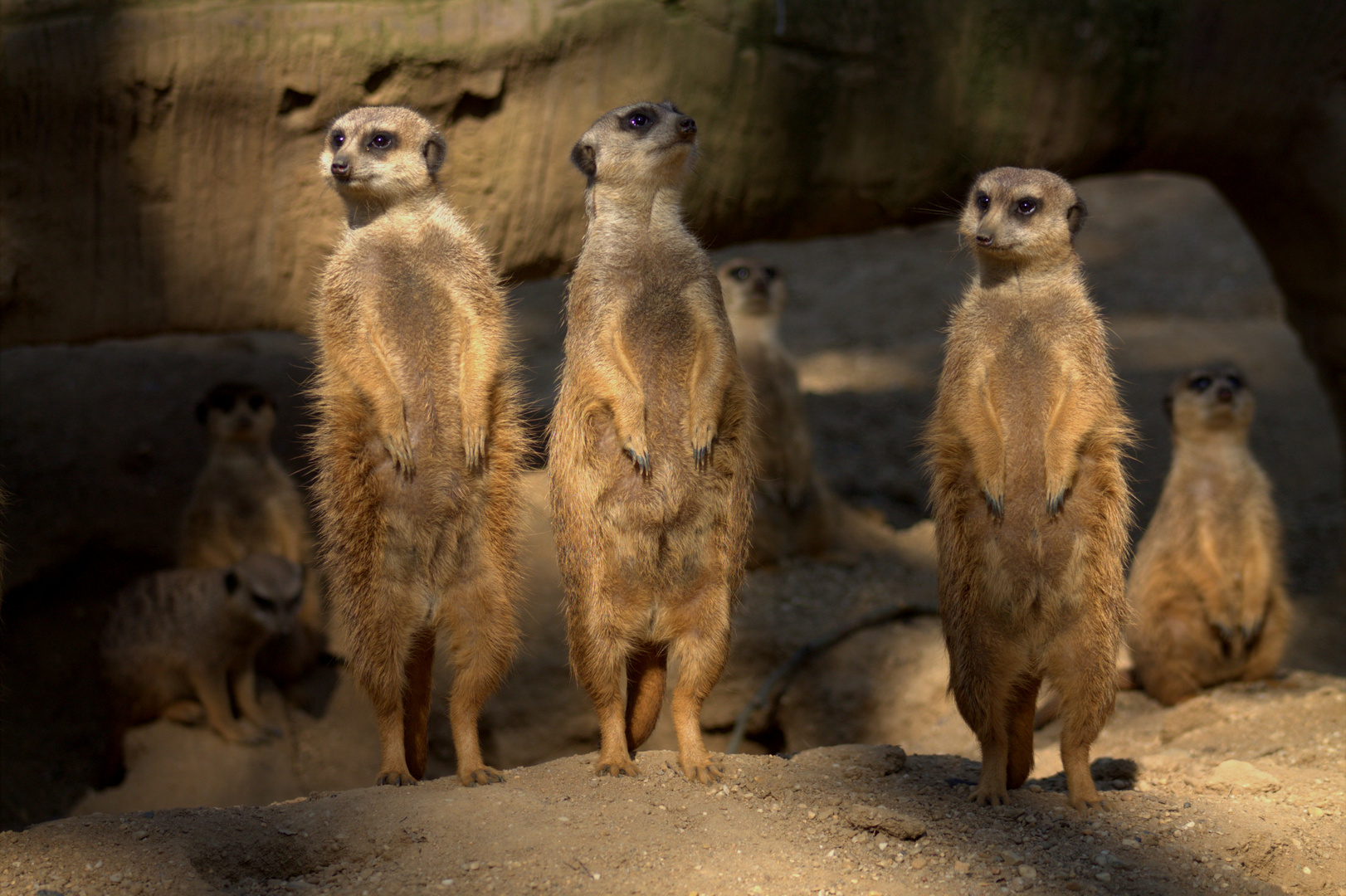 Erdbärmännchen ( in Kindersprache)
