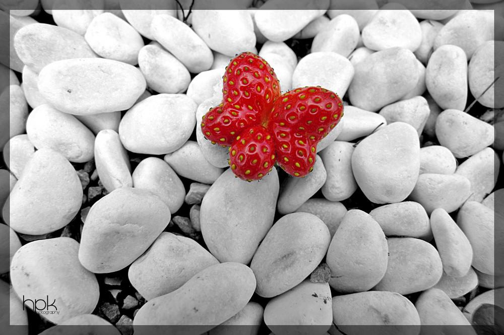Erdbeer Schmetterling