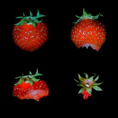 Erdbeere 1 2 3 ......