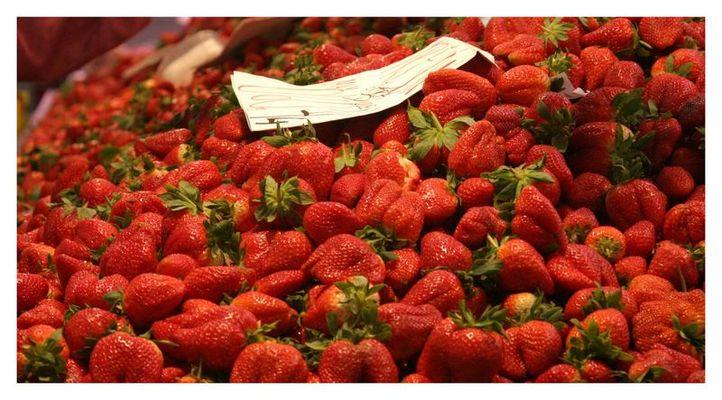 Erdbeeren so weit das Auge reicht ...
