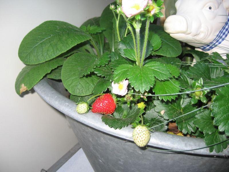 Erdbeerenzeit