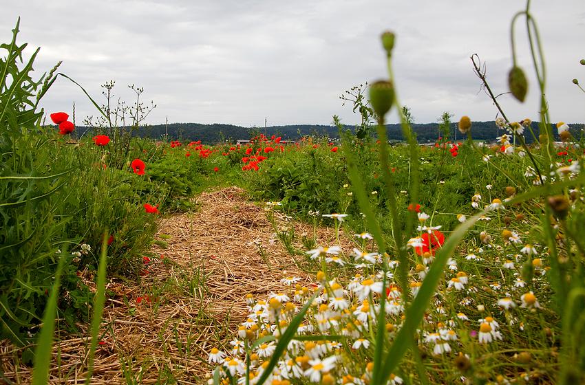 Erdbeerfeld ...