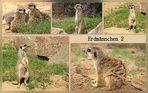 Erdmännchen Collage 2