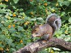 erdnusshörnchen
