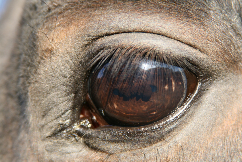 Erfahrenes Auge...