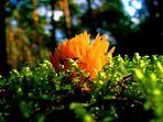Erfahrungen sammelt man wie Pilze: ...