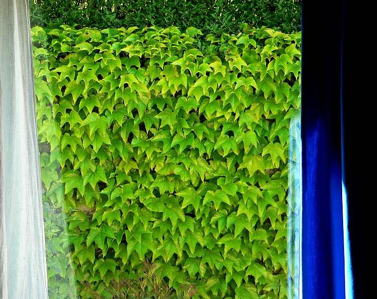 erfrischend...weiß, grün und blau... gute laune