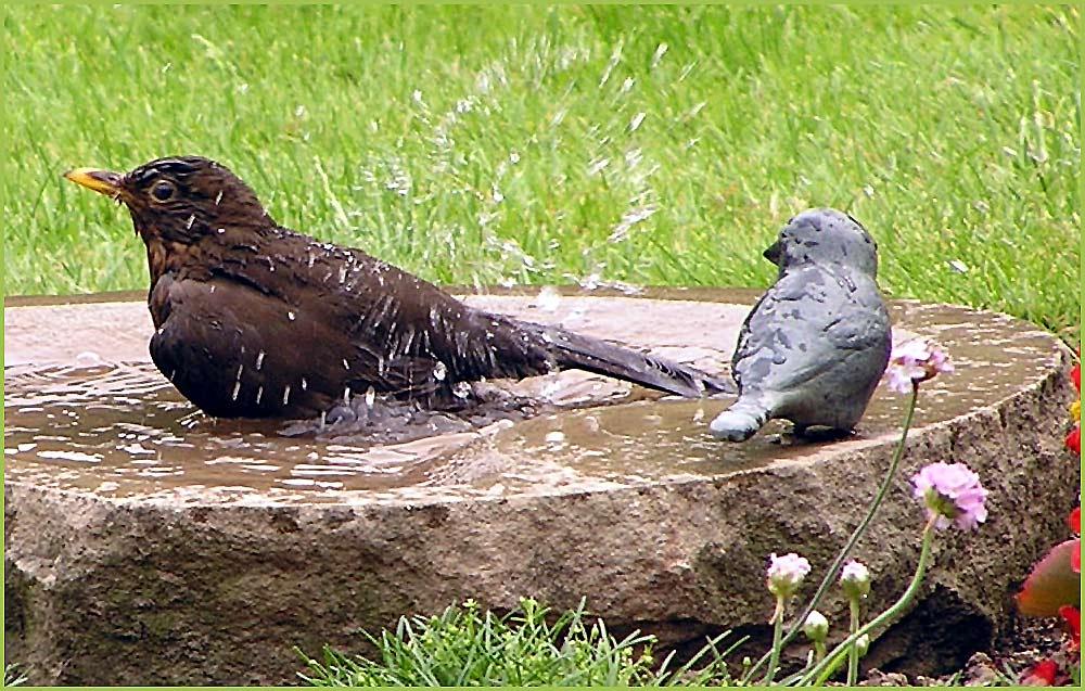 Erfrischungsbad