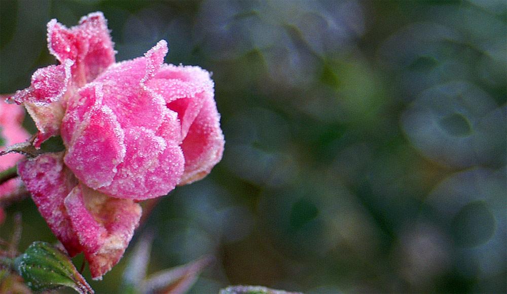 ...erfroren...