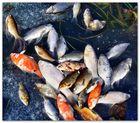 erfrorene Fischstäbchen