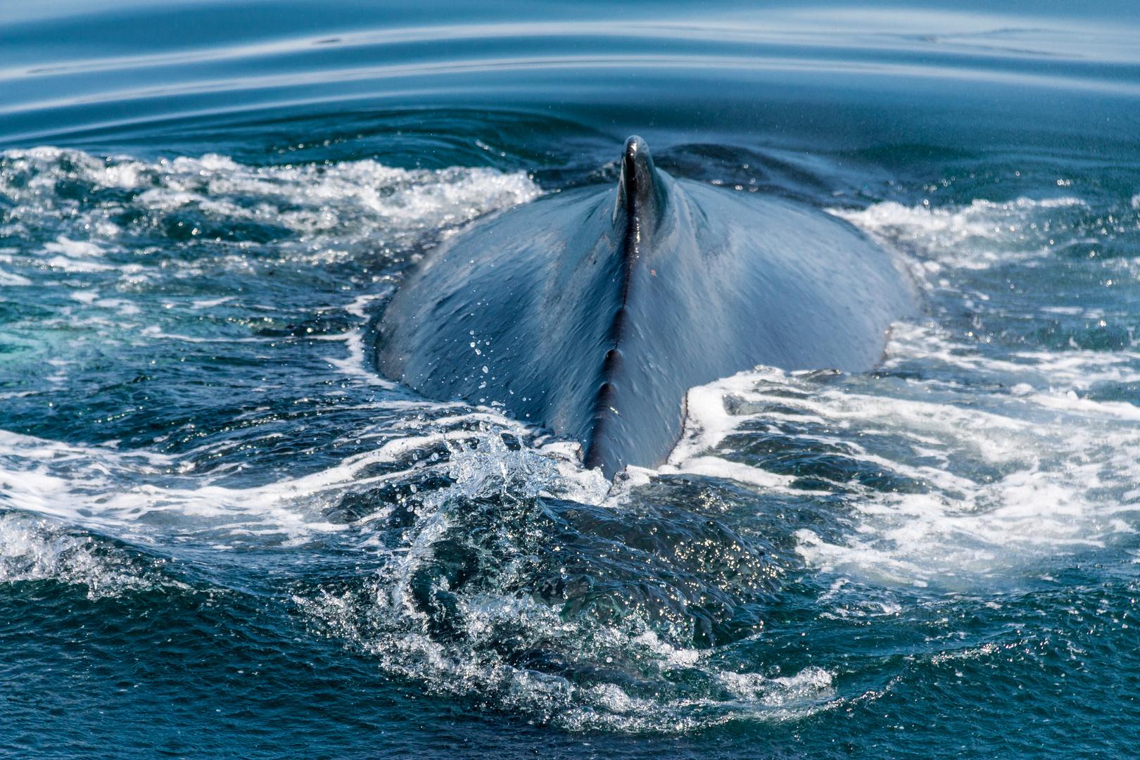 Ergebnis meiner Walbeobachtung