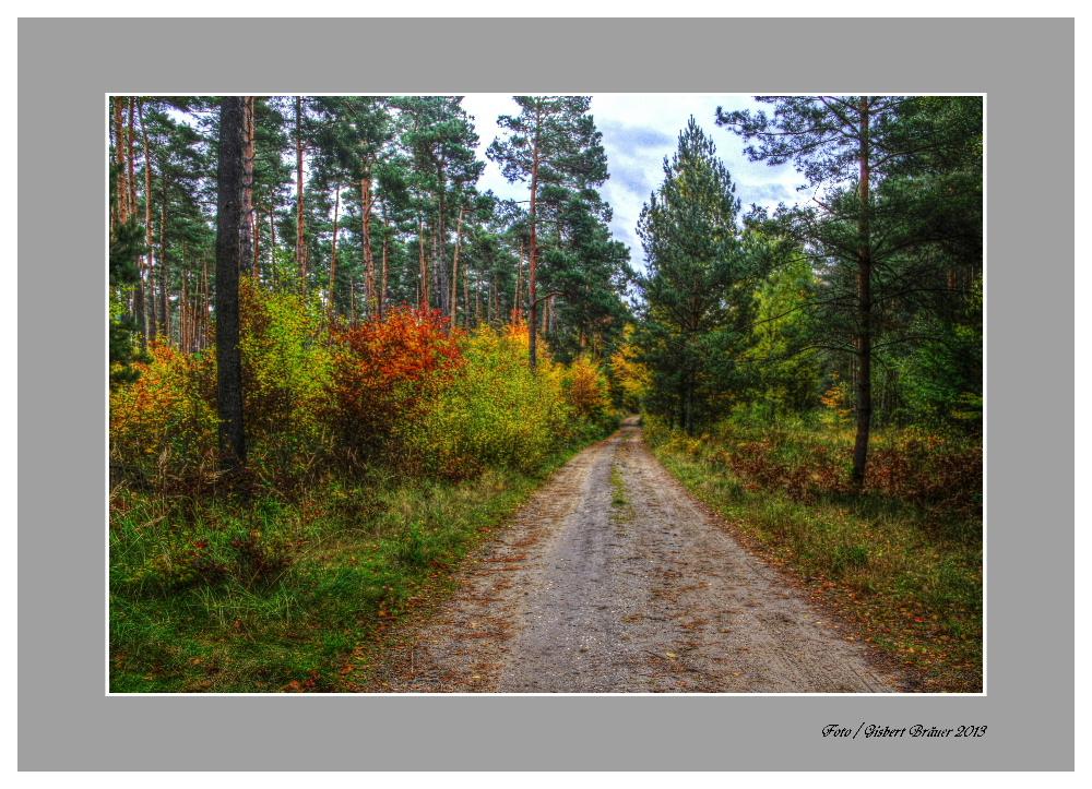 Erholungs Spaziergang in der Dübener Heide