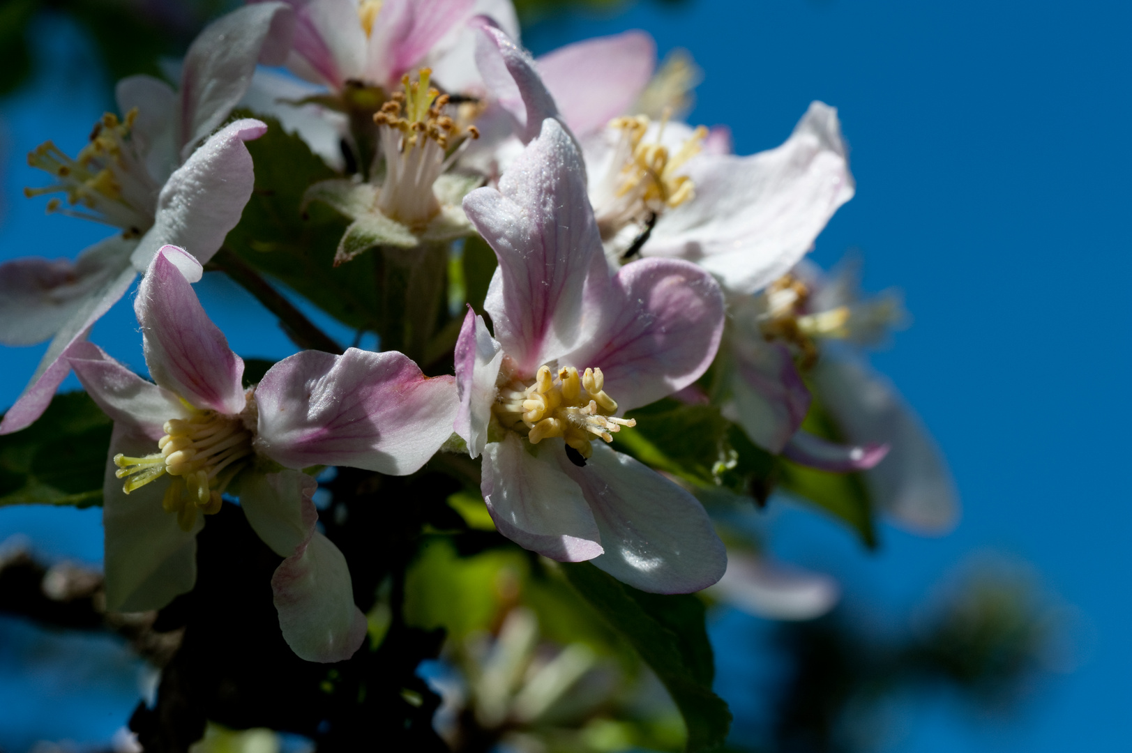 Erinnerung an den Frühling