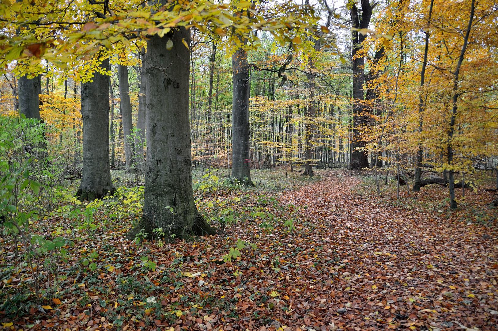 Erinnerung an den Herbst 2012