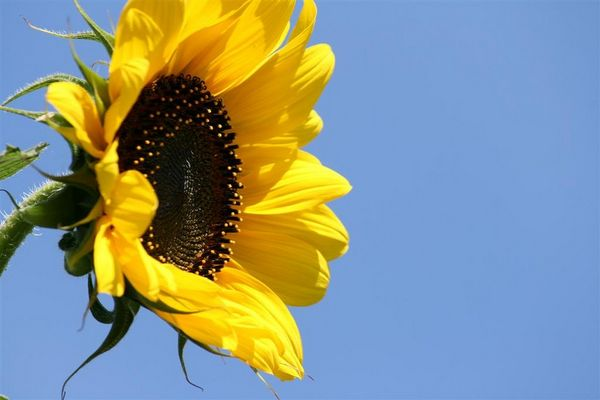 Erinnerung an den schönen Sommer!