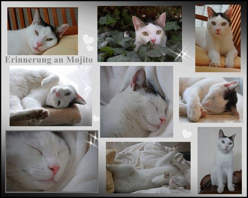 Erinnerung an Mojito*