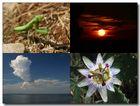 Erinnerungen: 1. Gestatten Gottesanbeterin 2. Sonnenuntergang 3. Zerplatzte Wolke 4. Eine Schönheit