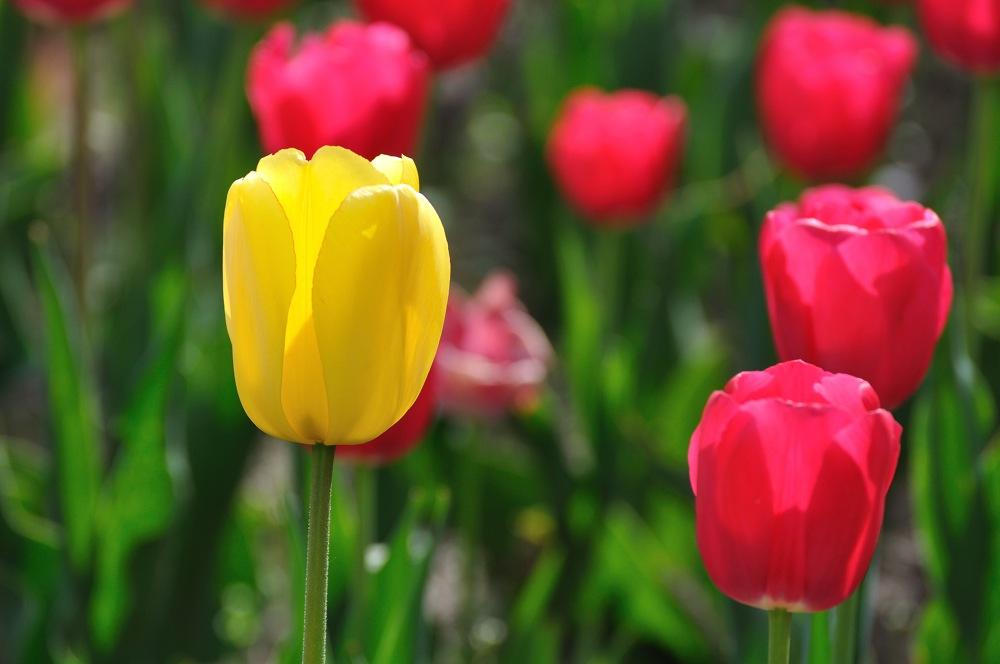 Erinnerungen an den Frühling 2