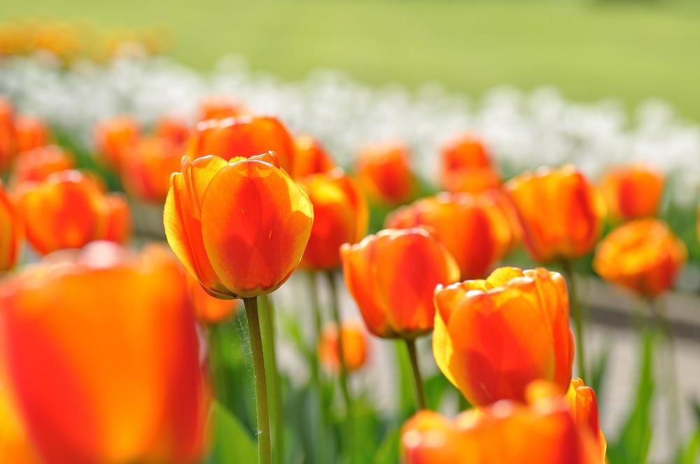 Erinnerungen an den Frühling 4