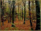 Erinnerungen an den Herbst!
