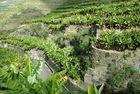 Erinnerungen an La Palma XIII (Vor einem Jahr, erste Foto 12.2.- 6.4.2013)