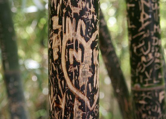 Erinnerungen im Bambusgarten