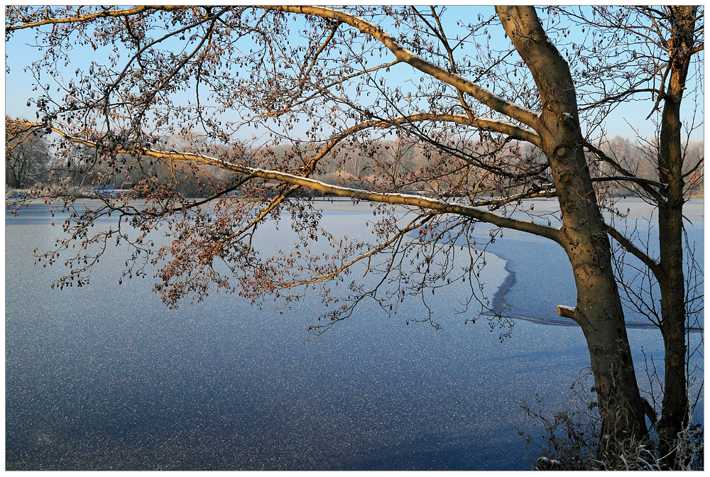 Erle am See