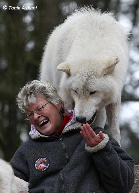 Erlebnis mit Wölfen