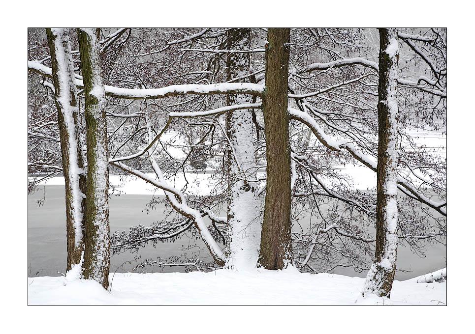 """"""" Erlen im Schnee """""""