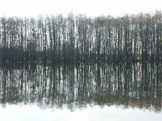 Erlenwald