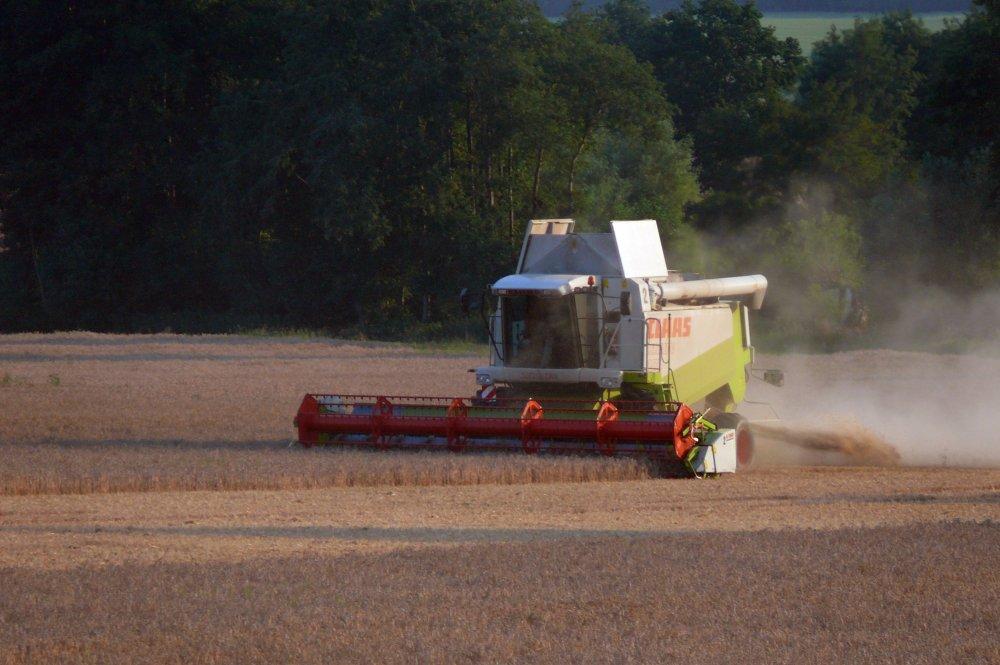 Ernte - harvest
