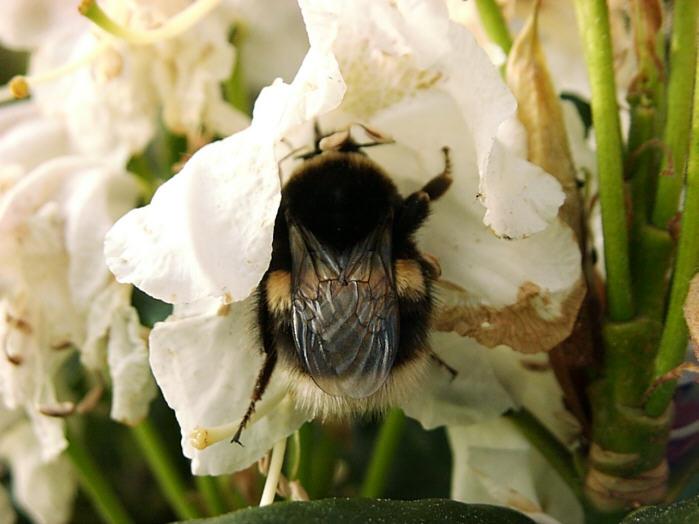 Ernte im Insektenreich