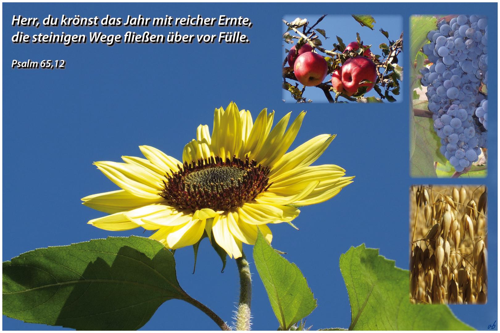 Erntedankfest.....Psalm 65,12