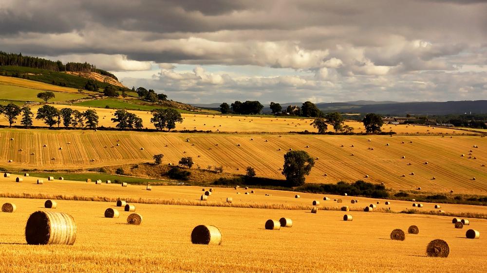 Erntezeit in Schottland