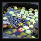 Erntezeit mit Apfelsaft
